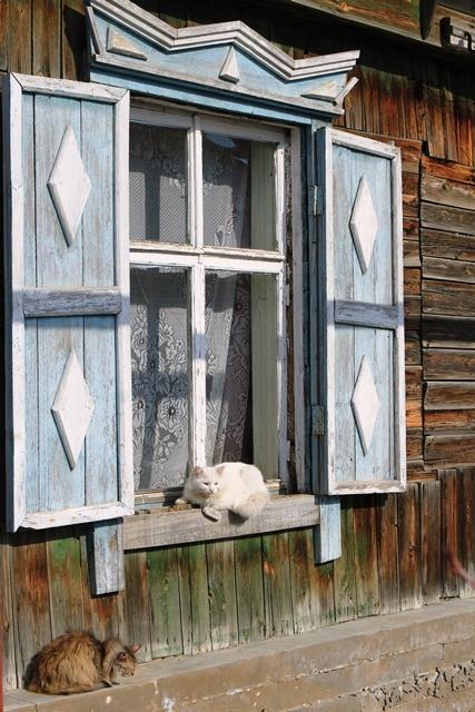 Кинельские кошки