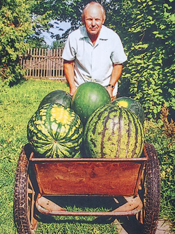 Огромные арбузы у баб фото 306-364